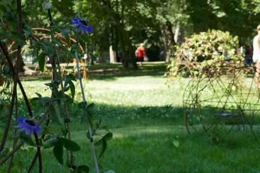 Leroy Merlin Source Esthétique Et Potager Le Jardin Seed